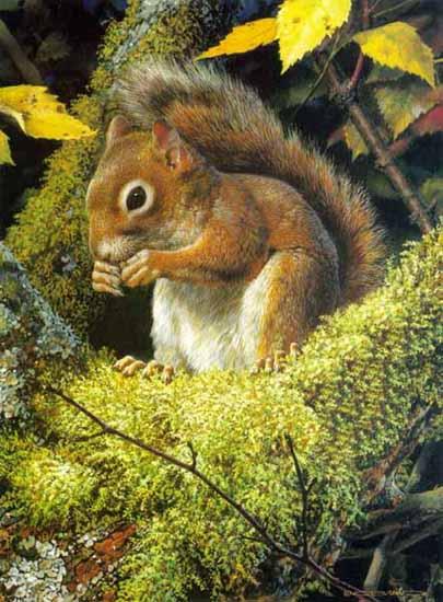 brenders-acrobatsmealthe-redsquirrel (405x550, 53Kb)
