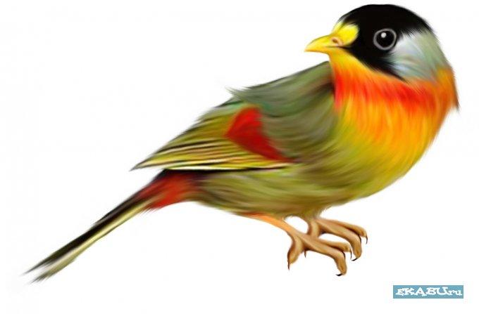 Как сделать своими руками кормушку для птиц