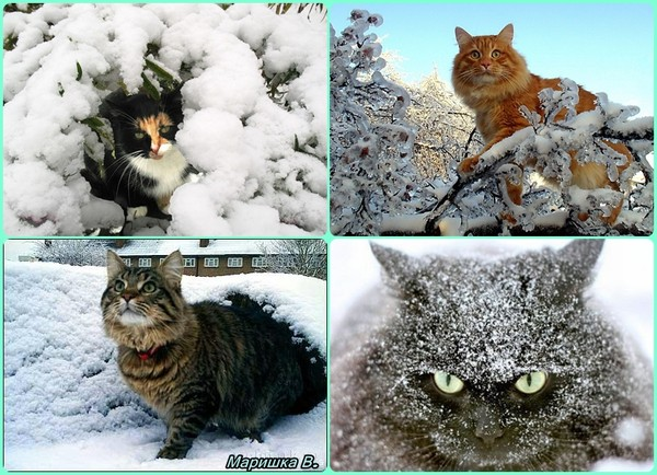 кошки и снег (600x434, 103Kb)
