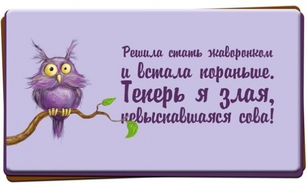 2835299_SOVA (600x360, 112Kb)