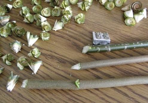 faca-um-arranjo-com-rosas-de-madeira-6-7886495-203 (495x346, 143Kb)