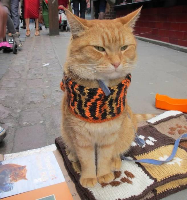 Сек рассказы с котом 6 фотография