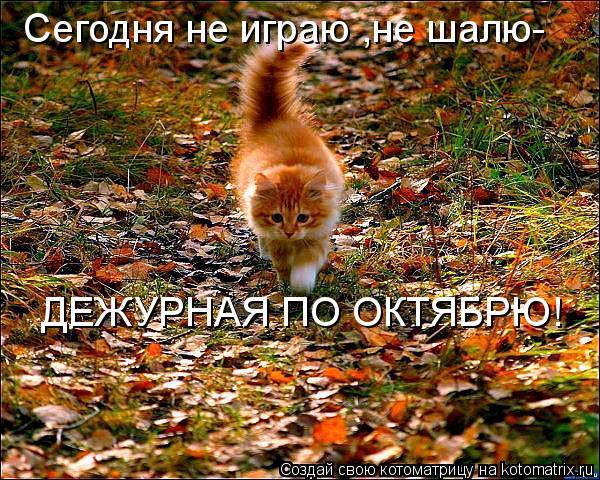 kotomatritsa_H5 (600x480, 115Kb)