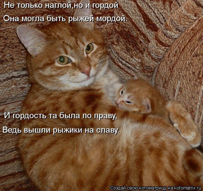 kotomatritsa_ij (700x661, 106Kb)