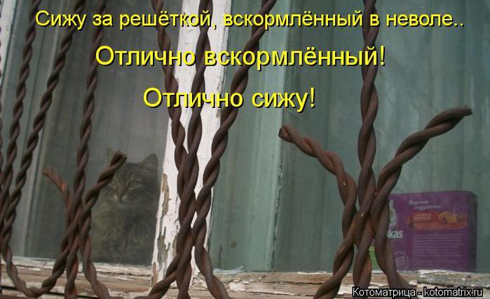 kotomatritsa_nU (700x426, 50Kb)