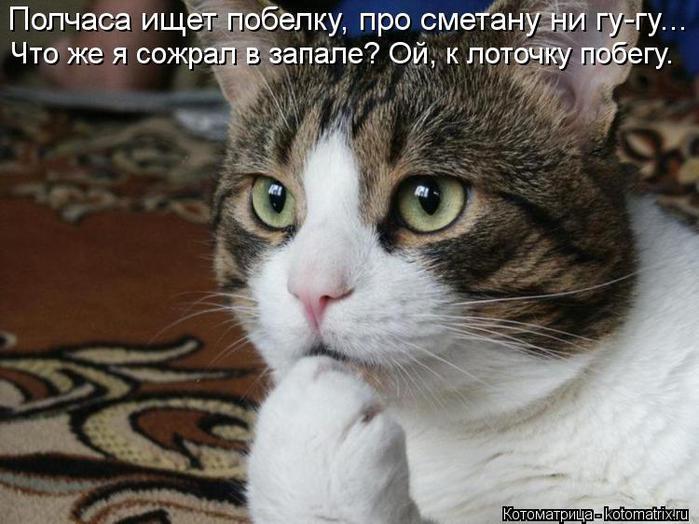 kotomatritsa_qQ (700x524, 60Kb)