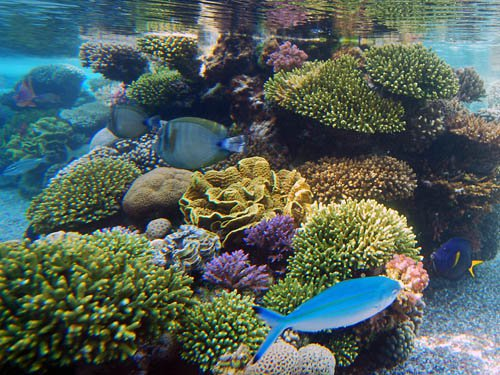 Подводный мир/1352657538_Podvodnuyy_mir_YEylata_2 (500x375, 74Kb)