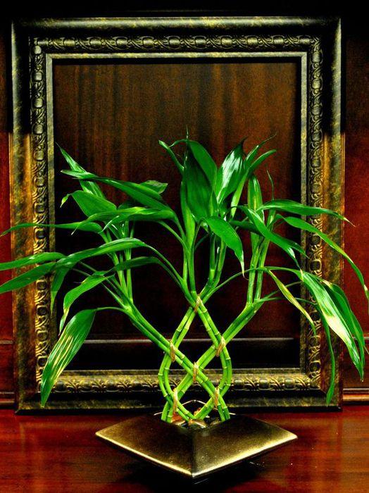 dicas de arranjos florais bambu (524x700, 87Kb)