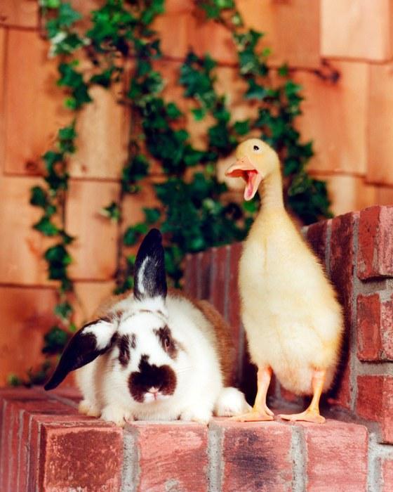 смешные животные фото Ren Netherland 1 (560x700, 85Kb)