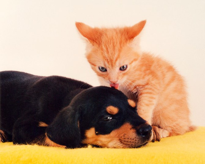 смешные животные фото Ren Netherland 7 (670x536, 56Kb)