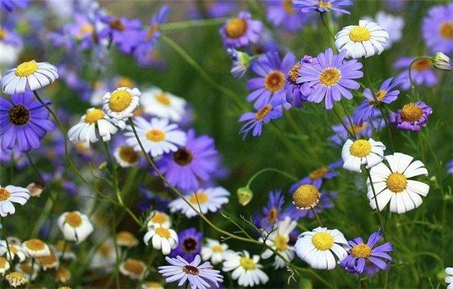 Полевые цветы нежные и трепетные