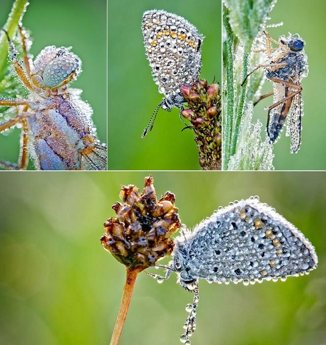 David_Chambon_insects_2 (662x700, 138Kb)