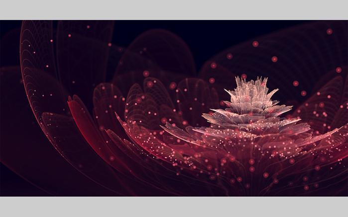 фрактальные цветы картинки Сильвия Кордедда 1 (700x437, 195Kb)