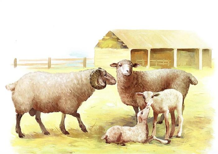 Картинки теленок