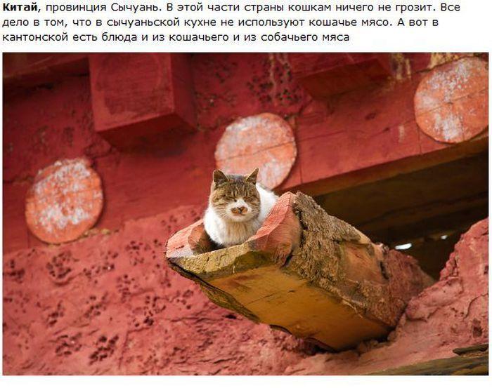 Города и кошки