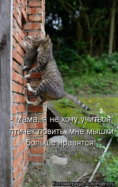 kotomatritsa_6G (381x604, 60Kb)