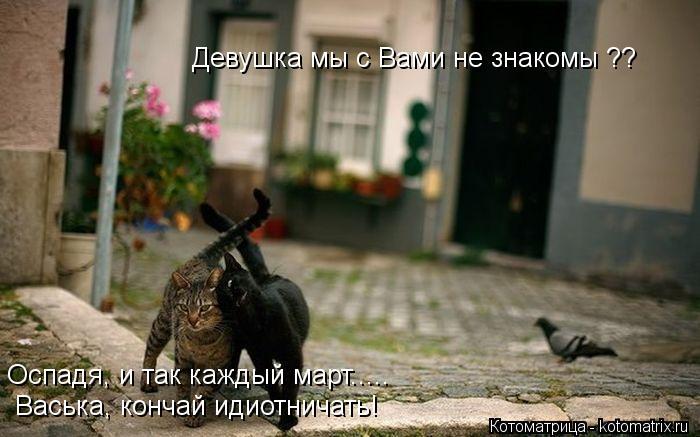 kotomatritsa_ed (700x437, 50Kb)