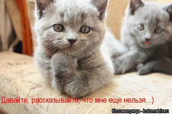 kotomatritsa_H (604x402, 43Kb)