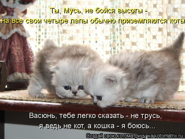 kotomatritsa_lb (600x450, 55Kb)