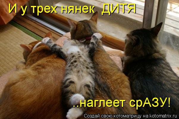 kotomatritsa_NV (602x400, 49Kb)