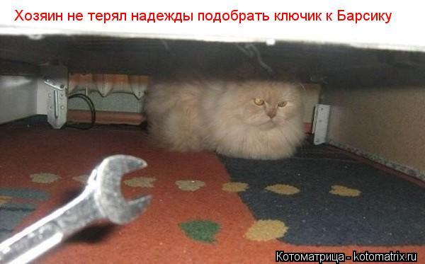 kotomatritsa_yc (600x373, 29Kb)