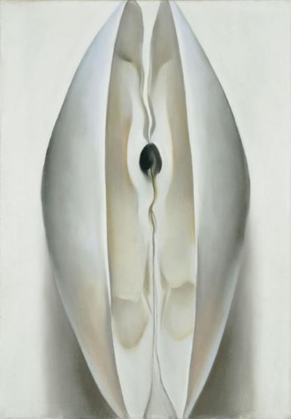 Hard clam  Wikipedia