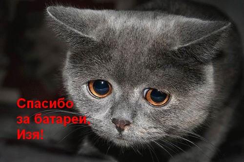 грустное котэ благодарит (500x333, 117Kb)