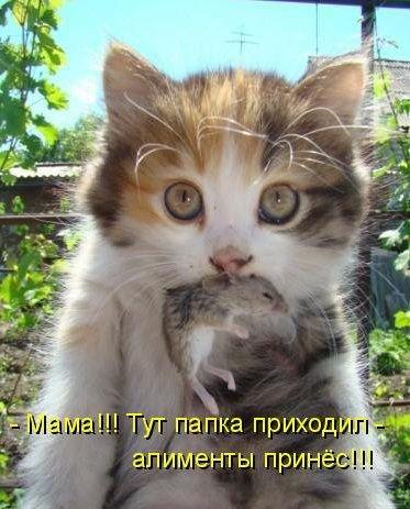 Алименты для котёнка (373x463, 44Kb)