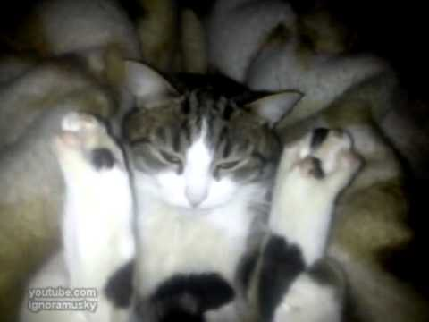 Cat meditation/3518263_kot (480x360, 9Kb)
