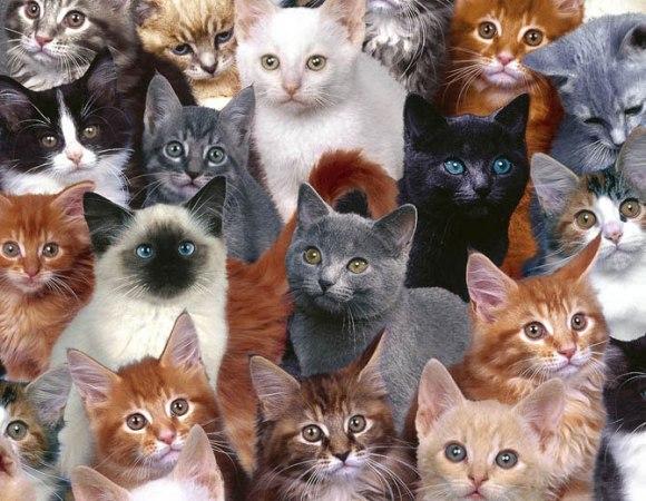 кошки. jpg (580x450, 79Kb)