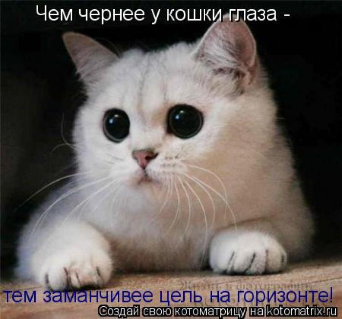4979645_1342350727_cats_kotomatrisi46_1 (700x653, 52Kb)