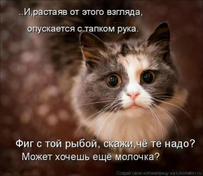 4979645_1342350697_cats_kotomatrisi36_1 (700x608, 48Kb)