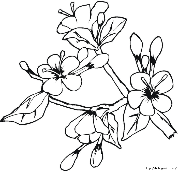 Blooming-flowers-in-may-coloring-page (700x672, 192Kb)