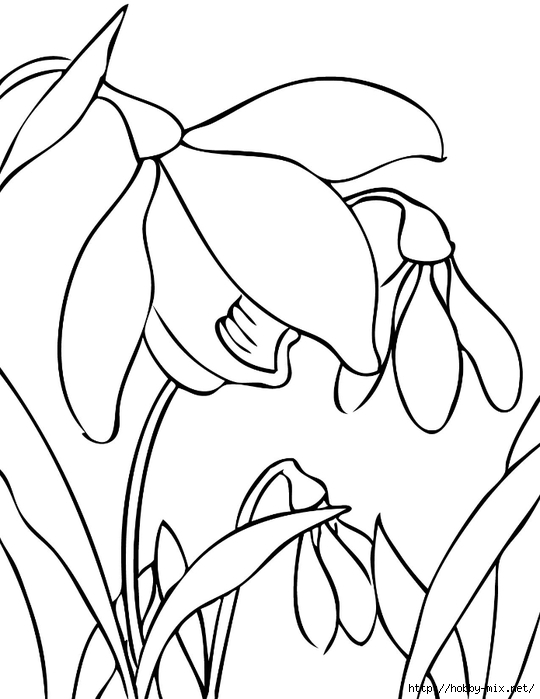 snowdrop_ink (540x700, 138Kb)