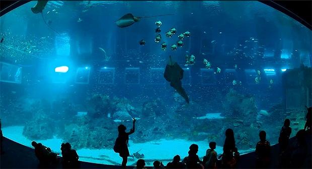 самый большой аквариум (620x336, 77Kb)
