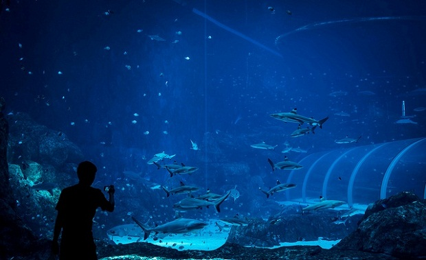 самый большой аквариум.jpg4 (620x379, 72Kb)