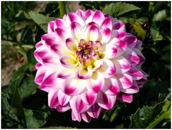 Цветы крупным планом картинки 3