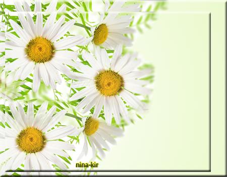 Веселые-ромашки (450x351, 260Kb)