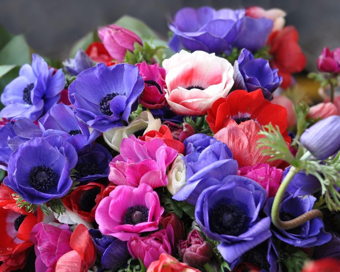 1280x1024_anemones-flowers-bolshoj-buket-bouquet-big-svetlyie (700x560, 110Kb)
