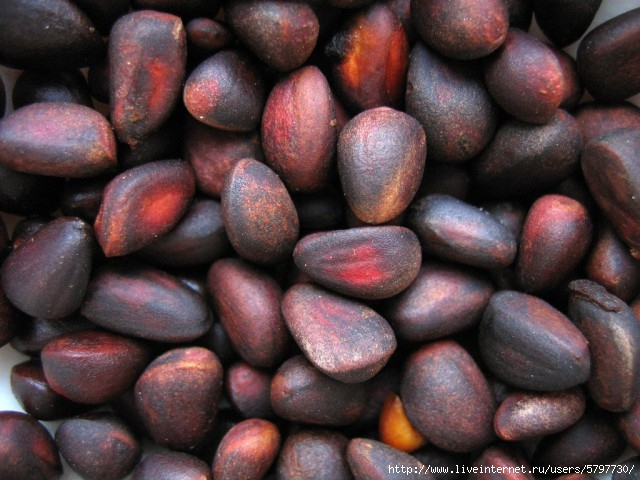 seeds_of_pinus_sibirica (640x480, 196Kb)