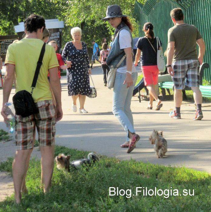 В парке повстречались две маленькие собачки (695x700, 104Kb)