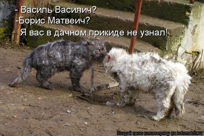 kotomatritsa_q (700x468, 68Kb)