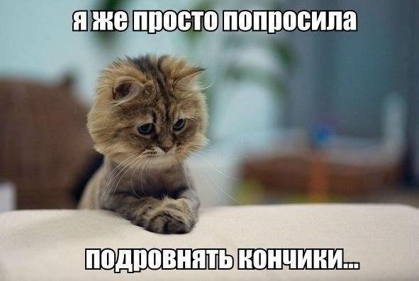 OHS_9kS2nuQ (591x397, 38Kb)
