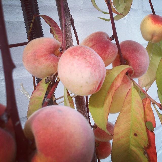 Персики из Дюссельдорфа