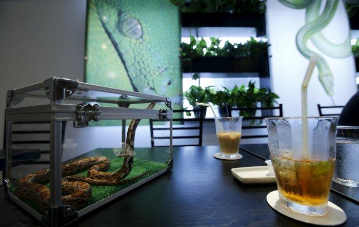змеиное кафе в токио 1 (700x442, 231Kb)