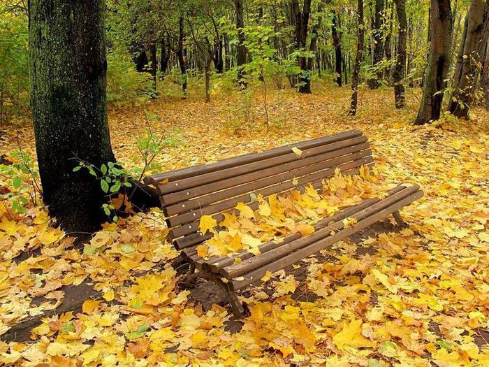 Autumn-natures-seasons-17473712-800-600 (700x525, 125Kb)