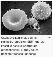 2979159_trombocit (227x243, 48Kb)