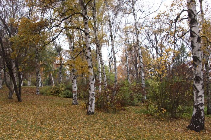 Осенний-лес-1261734909_75 (700x466, 571Kb)