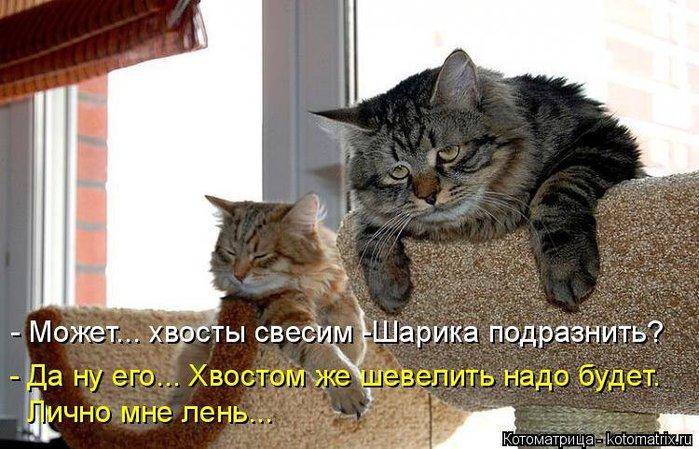 3085196_1429356235_kotomatrica5 (700x449, 85Kb)