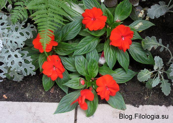 Красные цветы (700x496, 79Kb)